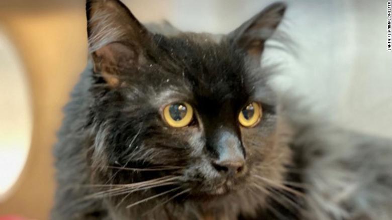 Пропавший кот нашелся спустя 5 лет на другом конце страны