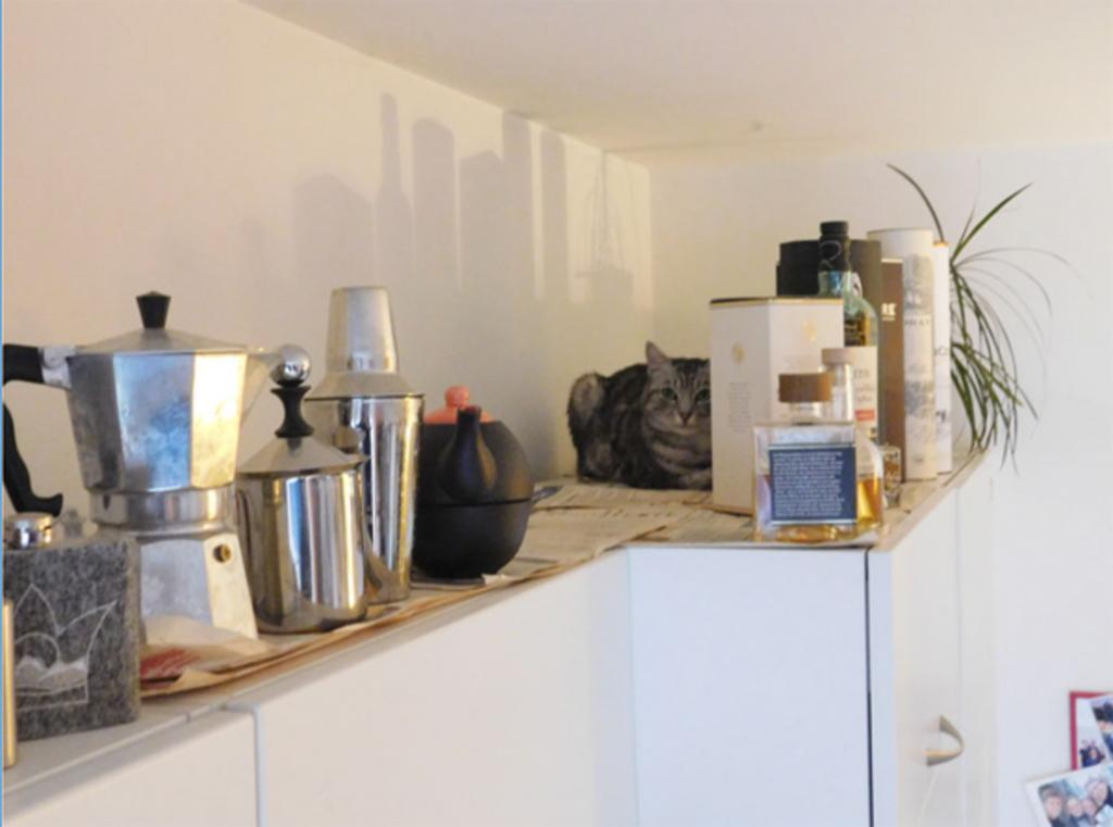 Чтобы найти кота на фото, надо очень постараться: забавный тест на внимательность