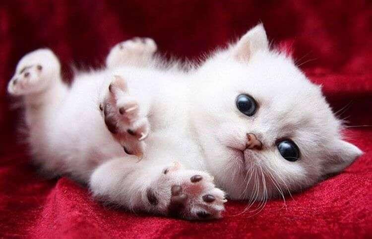 15 милых и потешных котят для поднятия настроения…
