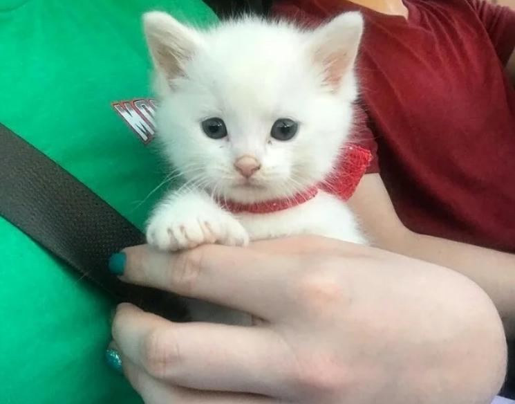 Купили котёнка на рынке для животных, а когда он повзрослел то у него выросли необычные лапки.