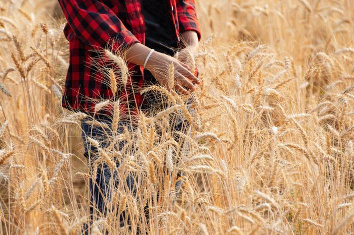 Женщина несла домой колоски пшеницы, солому, листья, а соседи лишь подсмеивались над ней. Но когда увидели, что она из них делает,   позавидовали