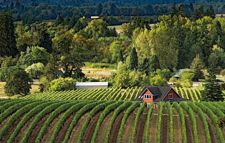 Самые лучшие винодельческие регионы мира: почему при покупке вина всегда стоит обращать внимание на место его производства