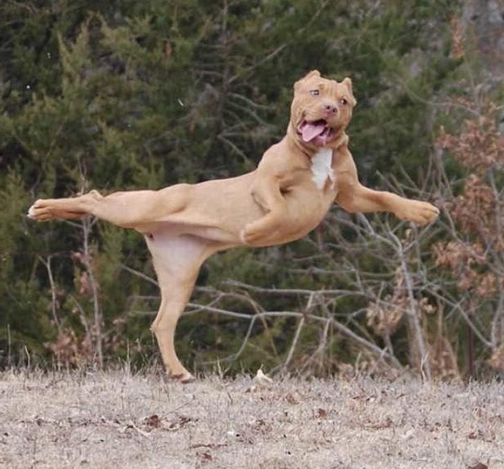 Забавные фотографии смешных собак, которые зарядят вас позитивом