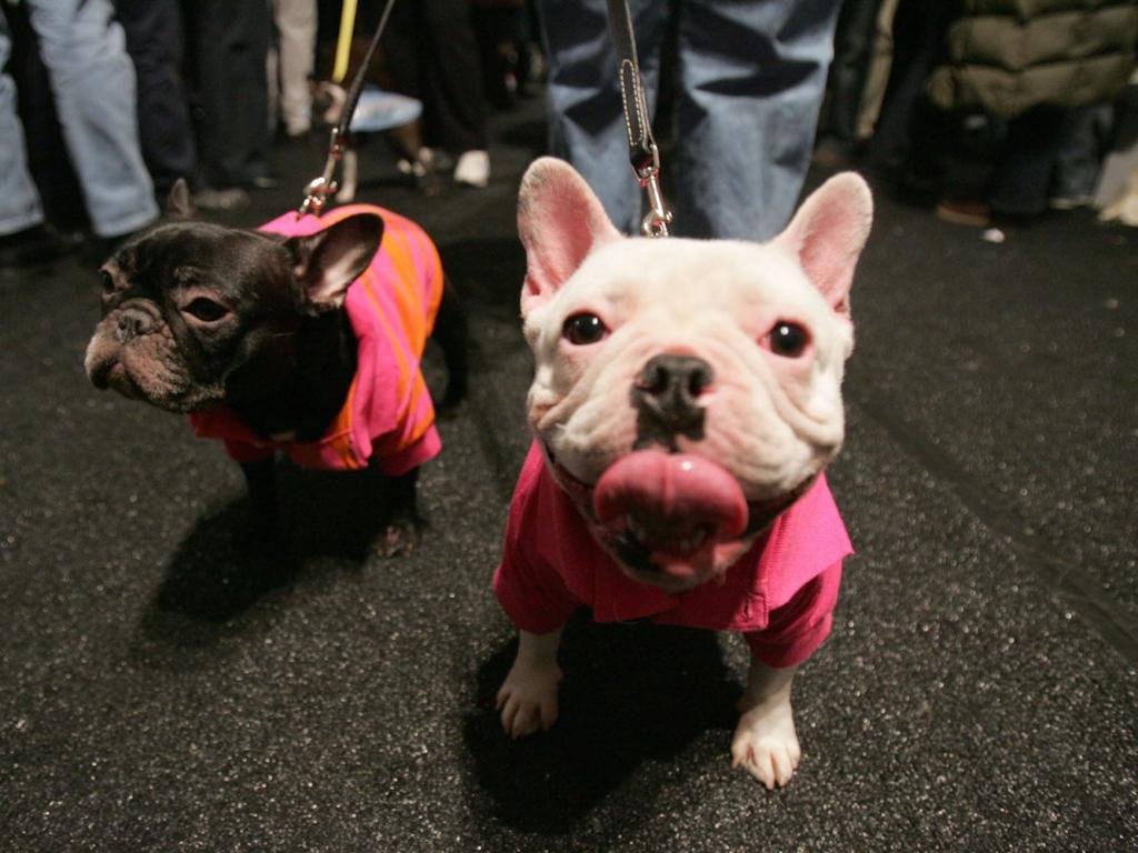 Собака постоянно лижет хозяина или воздух? Это тревожный признак, считают кинологи
