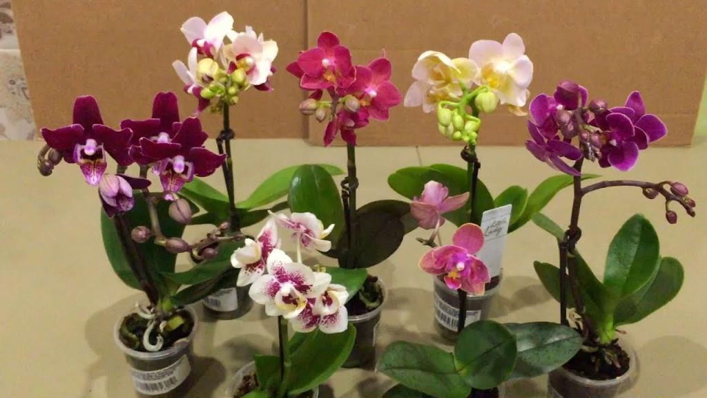 Положите кубик льда в горшок с орхидеями: 5 необычных советов по выращиванию комнатного растения