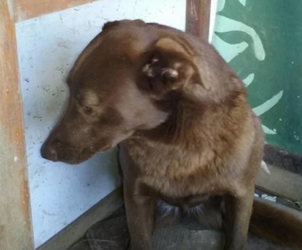 Собака с депрессией провела несколько лет в приюте. Все изменилось, когда она почувствовала знакомый запах (Видео)