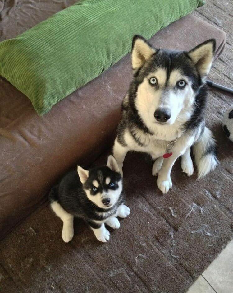 Собаки знают, что такое семья.