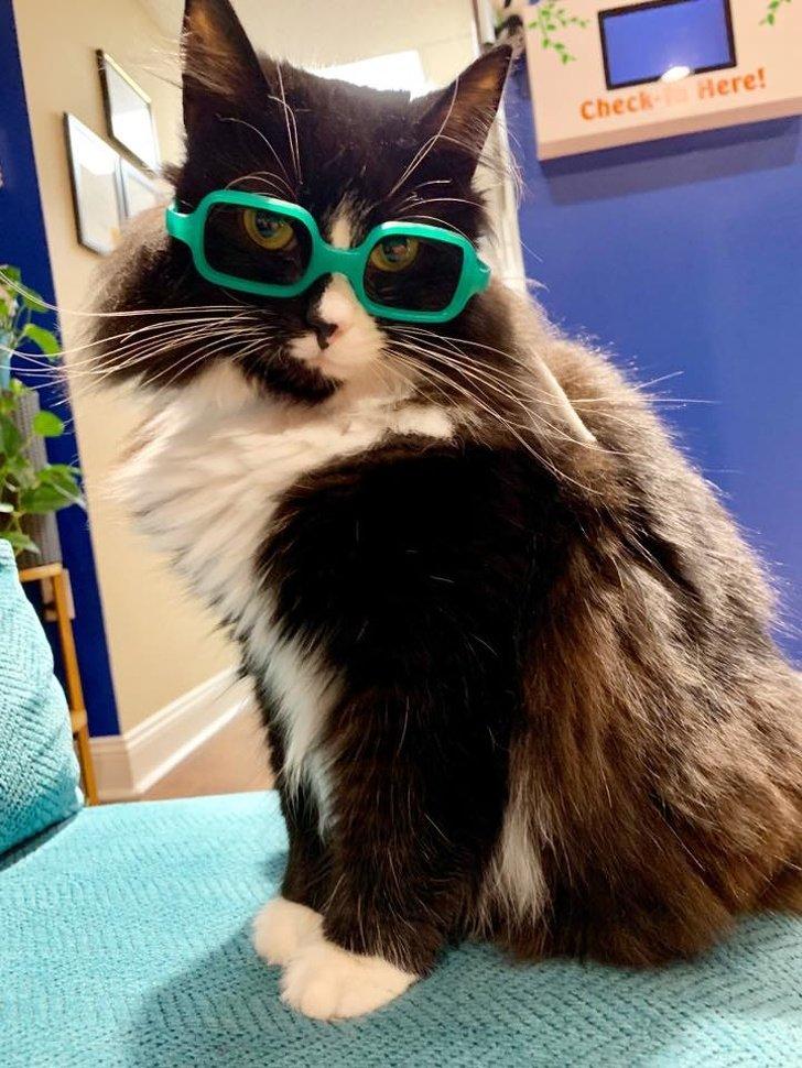 Пушистый консультант! Кот показывает детям в кабинете у врача, что очки   это не так уж плохо
