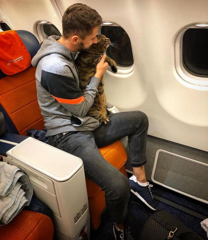 «Аэрофлот» лишил бонусов пассажира, который провез в салоне самолета слишком толстого кота