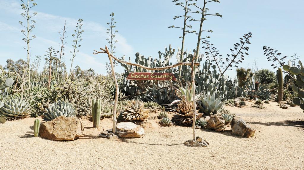 Из подаренной коллекции кактусов австралиец сделал целый сад, куда теперь приезжают тысячи туристов