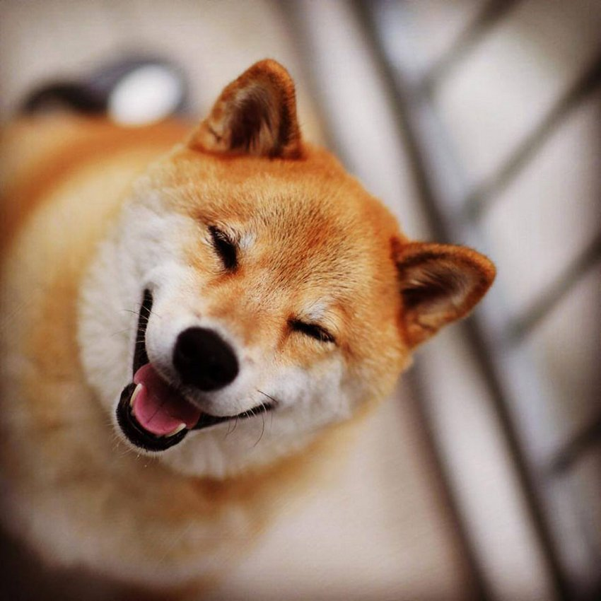 Животные тоже умеют улыбаться. Собака по кличке Мокка покорила своей харизмой (видео)