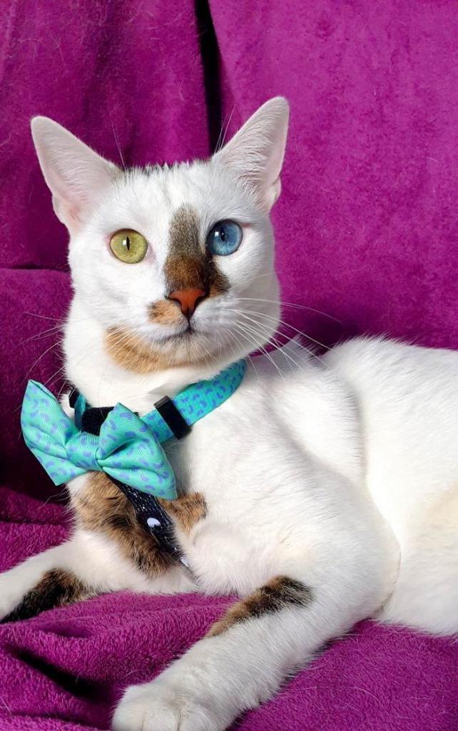 Женщина нашла в парке котенка и забрала домой: кот вырос и покорил Интернет своими необычными глазами