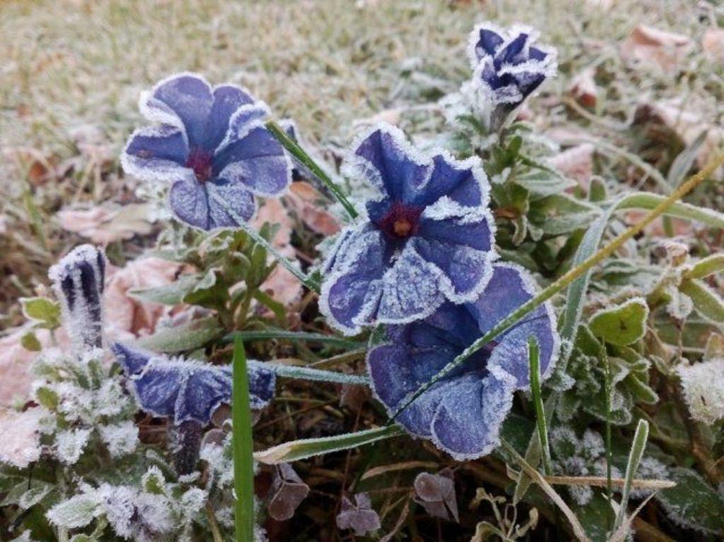 Красота, которой не страшны заморозки: петуния, календула и еще 8 цветов, которые украшают мой сад в ноябре