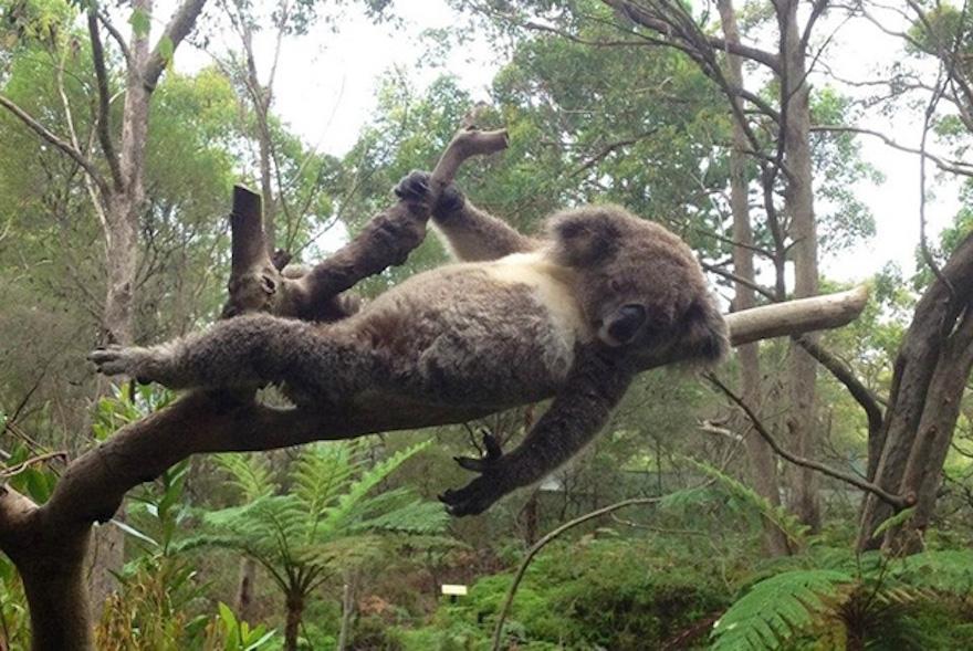 Питомцы любят фотографироваться: 10 забавных фото, когда животные позируют