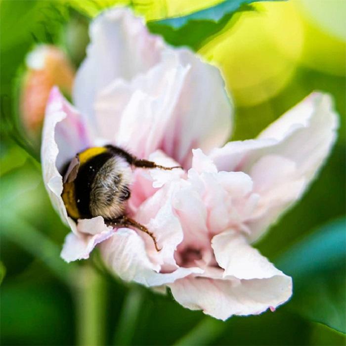 фото уставшей пчелки подход выбору