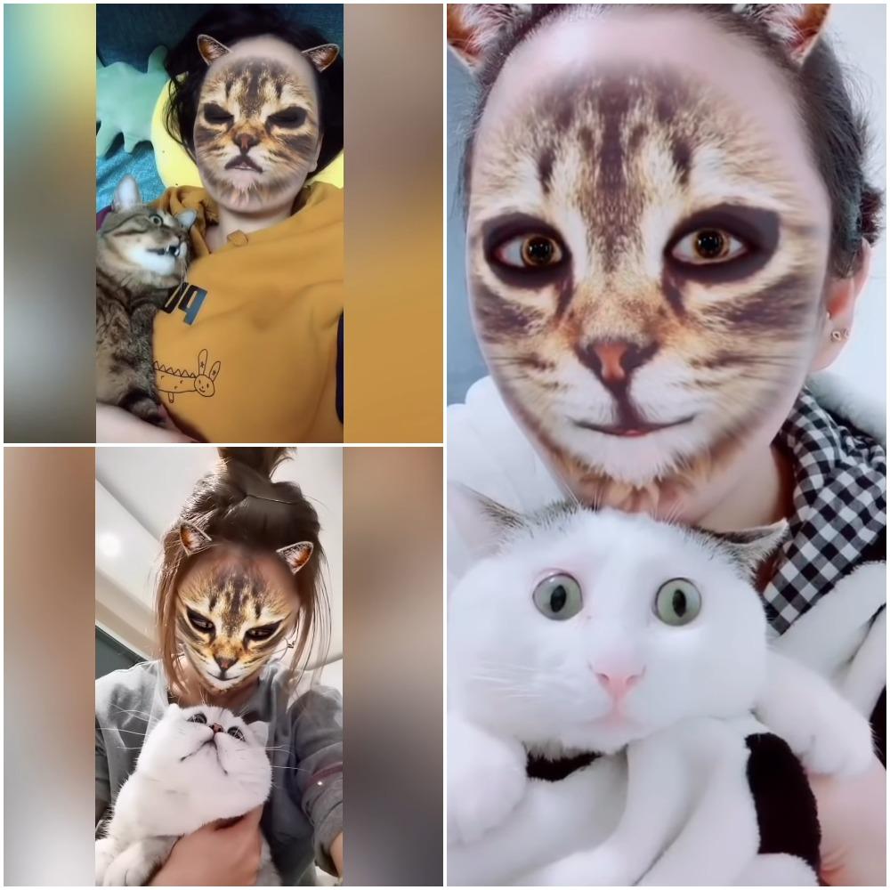 Хозяева применили «кошачьи» фильтры на своих смартфонах: как отреагировали домашние любимцы (видео)