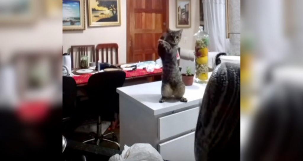 Сама бы не справилась: котенок помогает хозяйке  мыть посуду . Забавное видео рассмешило пользователей Сети