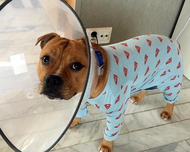 Владельцы посмешили: звонок ветеринарному врачу