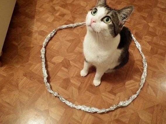 Ловушка для кошек. Почему коты садятся в нарисованый квадрат или круг?