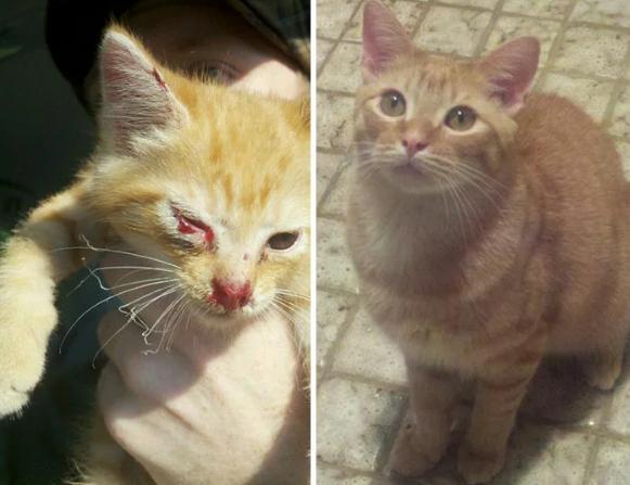 Как меняются спасенные кошки: трогательные фото до и после