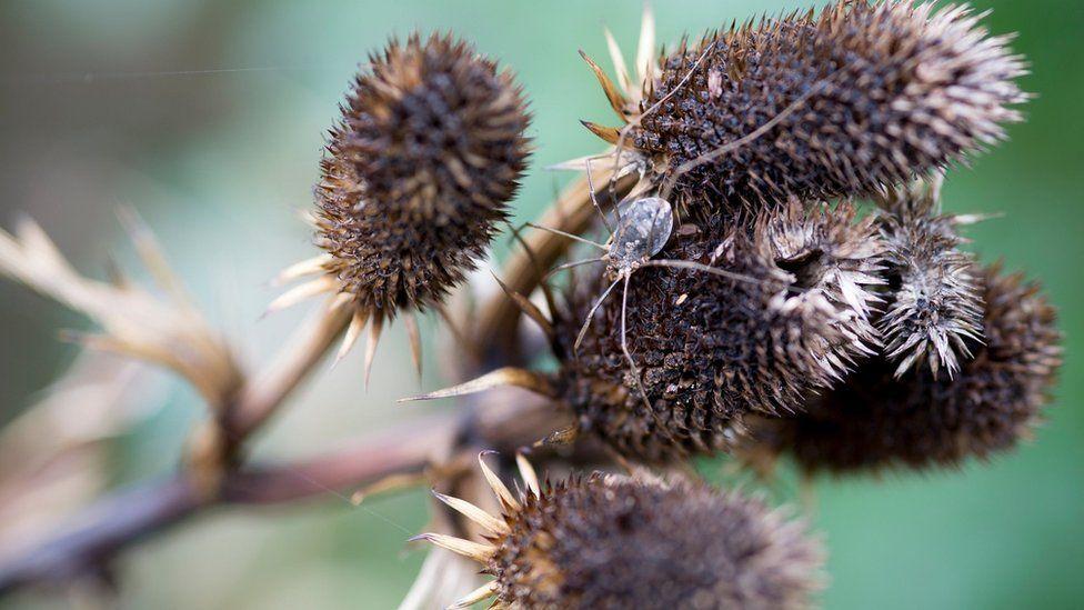 Ученые забили тревогу: наблюдается глобальное снижение численности насекомых по всему миру. Садовники, выручайте беспозвоночных!