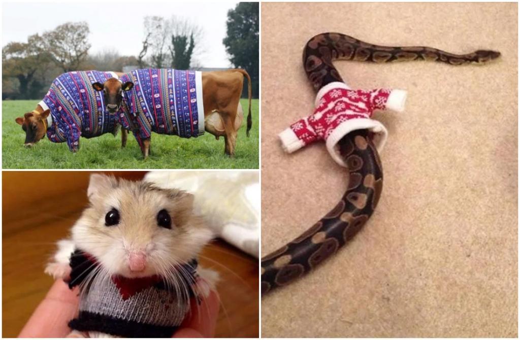 Время нарядить в свитер своего любимца: в ожидании новогоднего праздника даже змейка получит джемпер