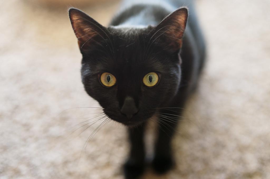 Как кошка реагирует на оптическую иллюзию: видео, набравшее уже более 6 000 000 просмотров