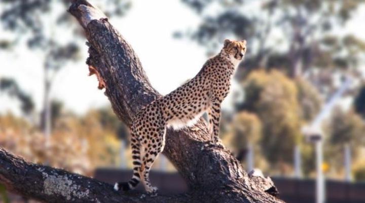 В Сиднее открывается самый крупный зоопарк в мире: есть ли в нем польза