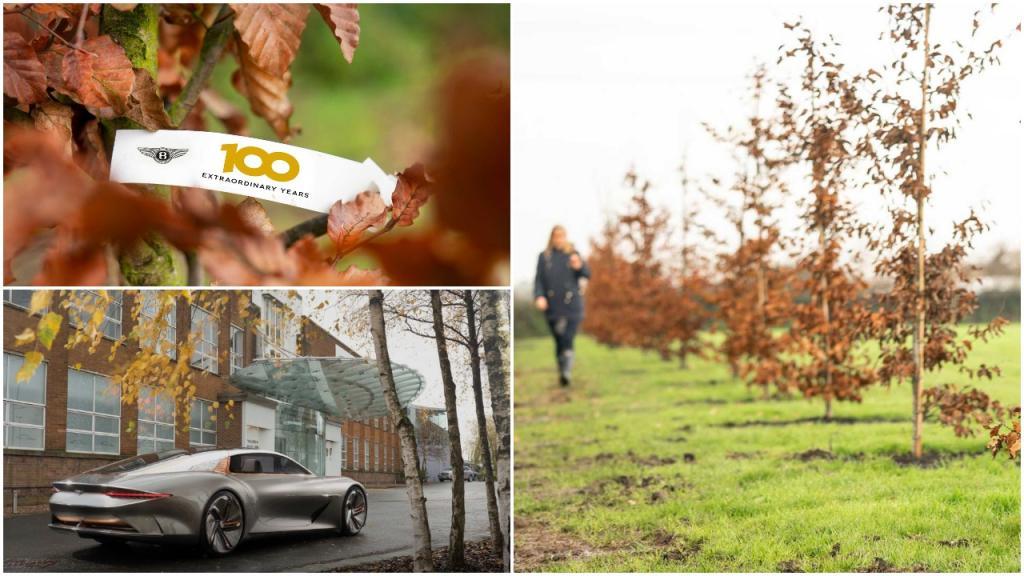 Юбилей «Бентли»: автогигант празднует свой сотый день рождения посадкой 100 деревьев