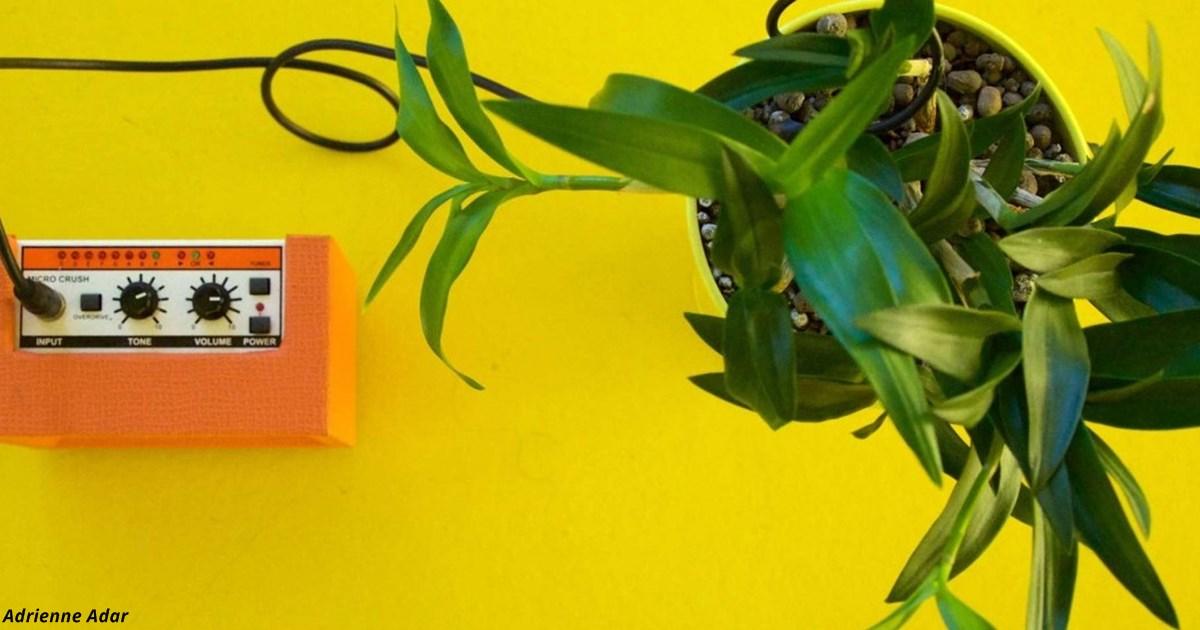 Учёные выяснили, что растения не просто живые: «Они визжат при стрессе и от боли»