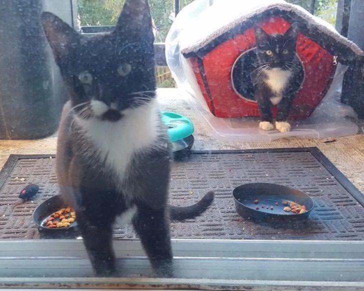 Куртис и Мелани пожалели уличную кошечку и стали ее подкармливать. Вскоре возле своей двери они увидели котят