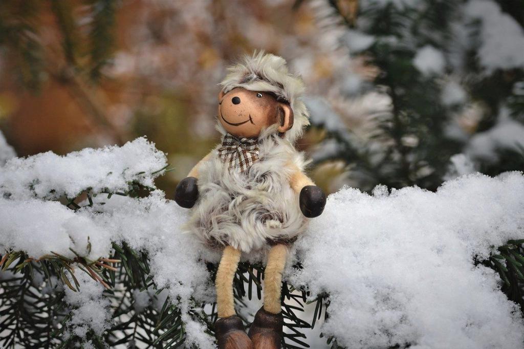 Для кого-то праздник, а кого-то разбудили: ученые посчитали количество зимующей
