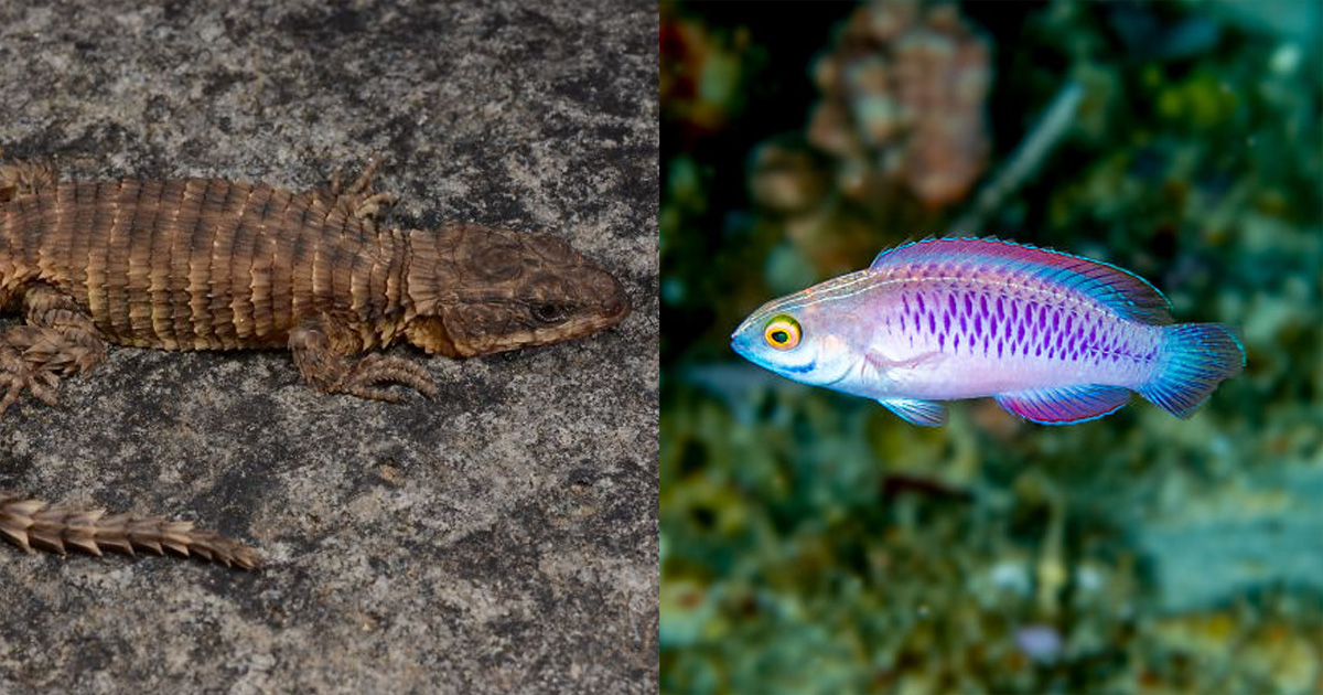 25 фото новых видов, которые ученые нашли в 2019 году