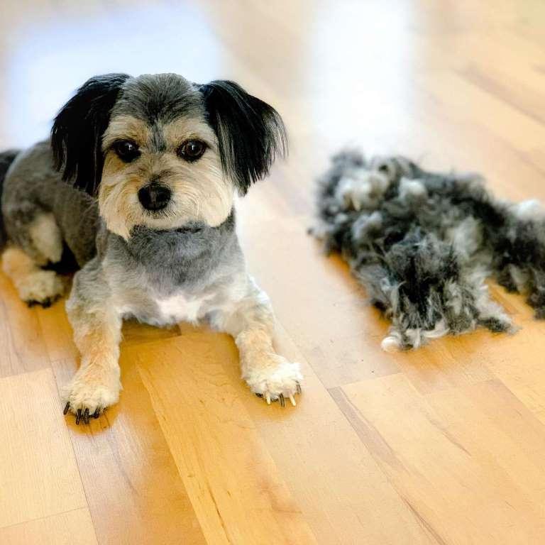 Виновата стрижка: фото собачки с маленькой головой напрасно взбудоражило пользователей сети