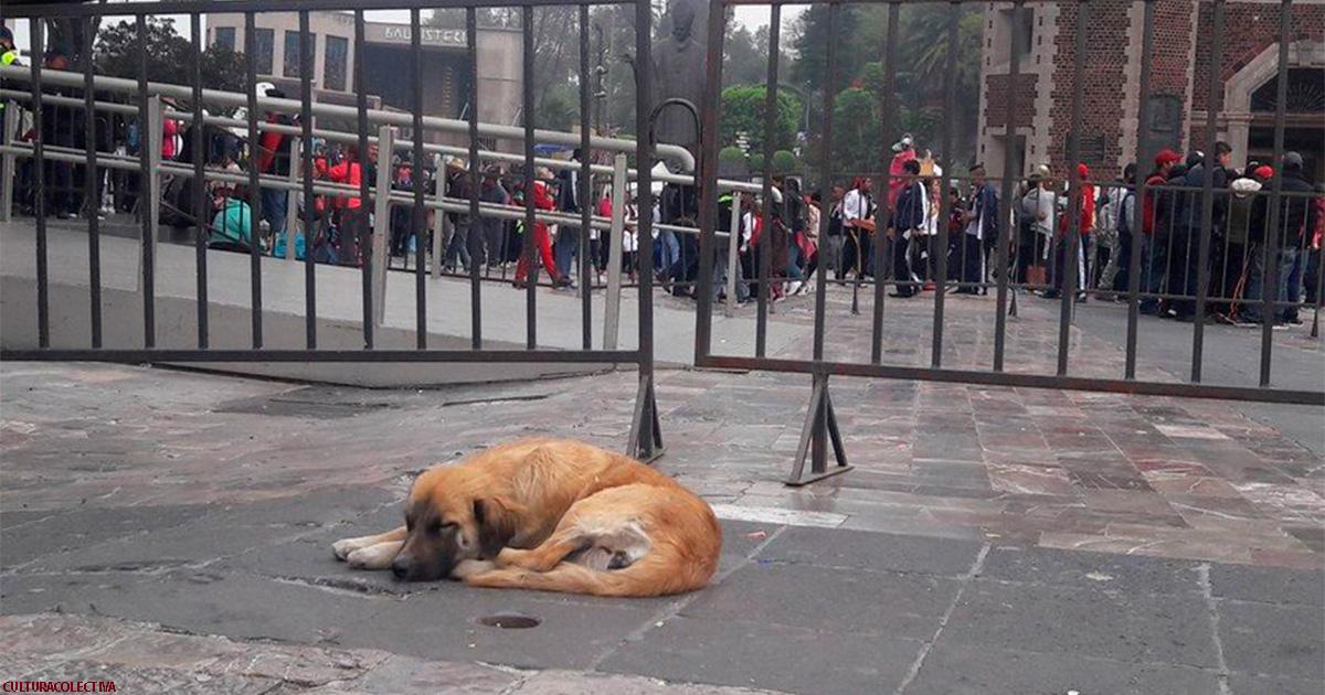 Каждый год базилика принимает сотни собак, брошенных паломниками