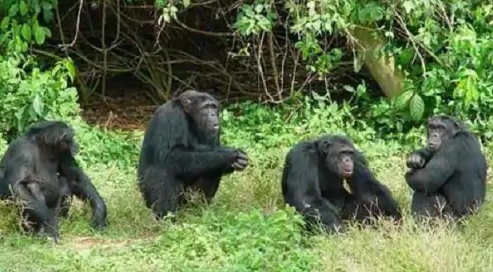 Повадки каких животных отражают поведение человека: ученые дают ответ