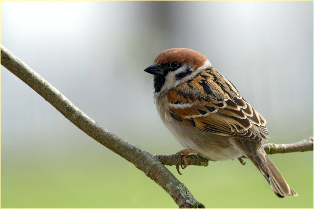 Опасно для природы! Из-за глобального потепления птицы могут вымереть?