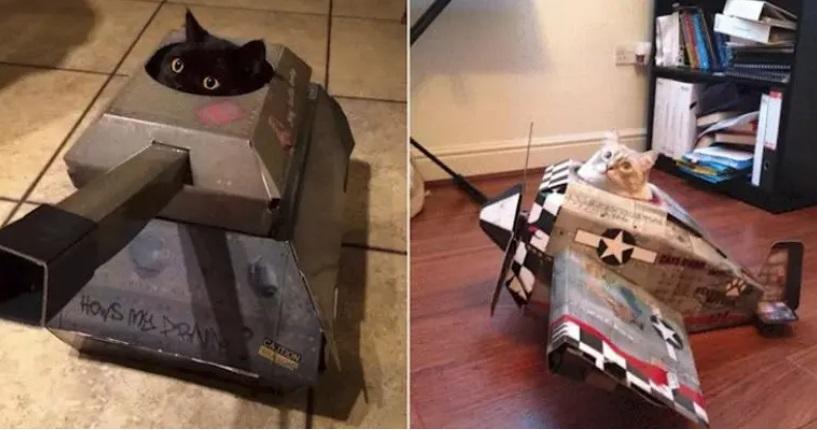 Кошки покоряют мир, и в этом им помогают специально разработанные картонные домики