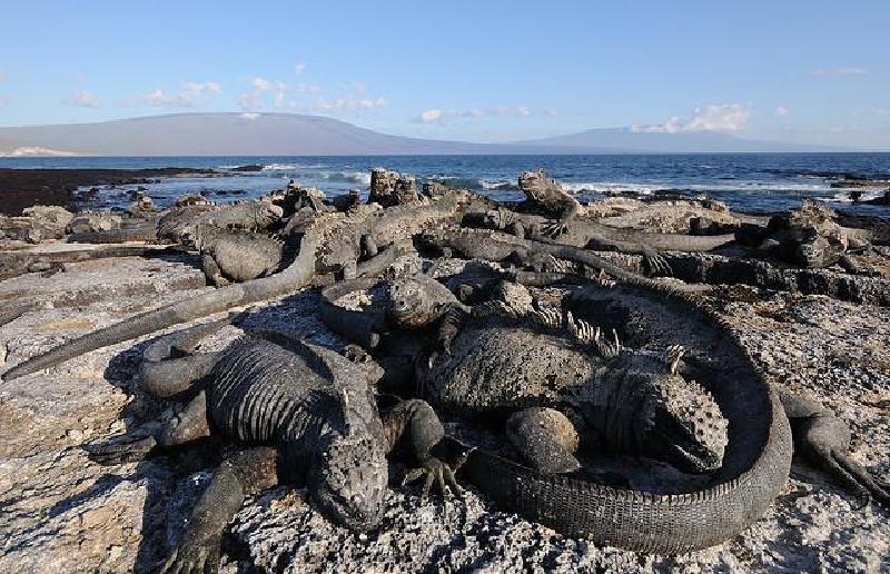 Шесть веских причин отправиться в круиз на Галапагосские острова: многие художники отправляются сюда ради вдохновения