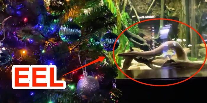 В этом году новогодняя елка  Теннесси Аквариума  в Чаттануге США освещается ударами электрического угря