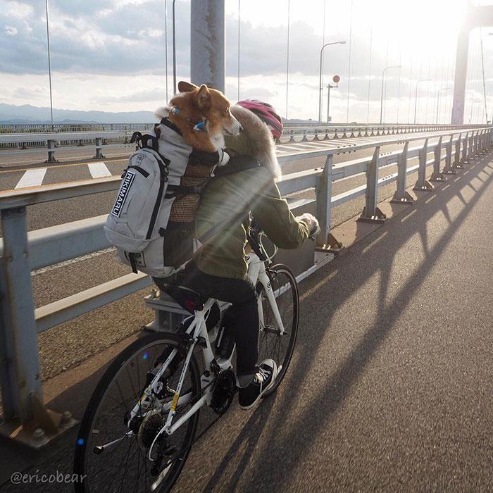 Японская инстаграмщица фотографирует своего корги по имени Эрико, и у него уже 50 тысяч подписчиков