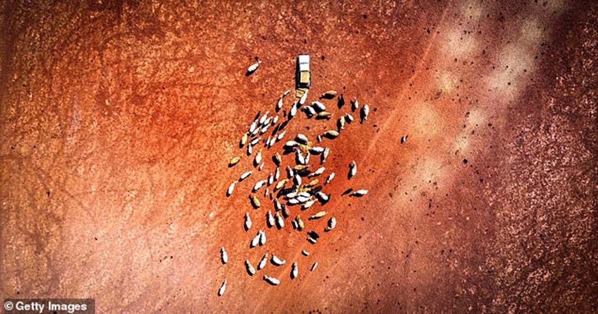 Огромная корпорация скупила 89 млрд литров воды в Австралии, которая страдает от засухи