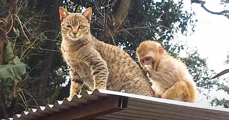 Кошка стала приемной матерью обезьянки и этим спасла ей жизнь