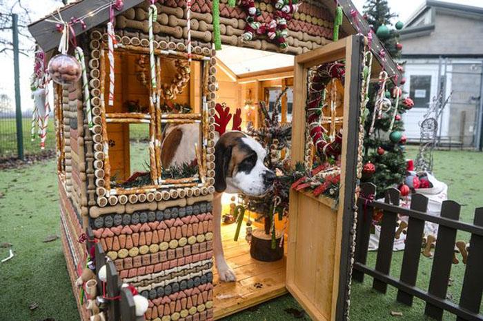 Это дом - его едят: в Манчестере для собак из приюта построили «пряничный домик» из 2000 бисквитов