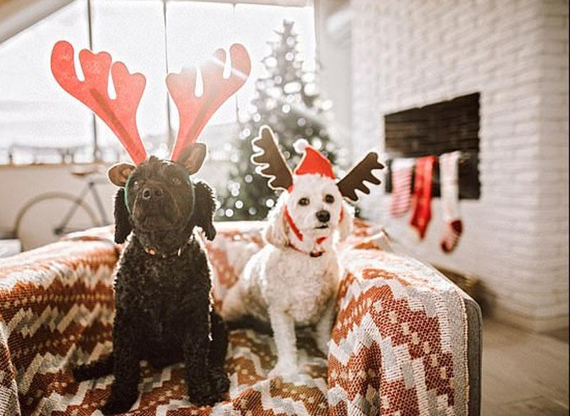 Баловать - так баловать: что дарят собакам на Рождество в Британии