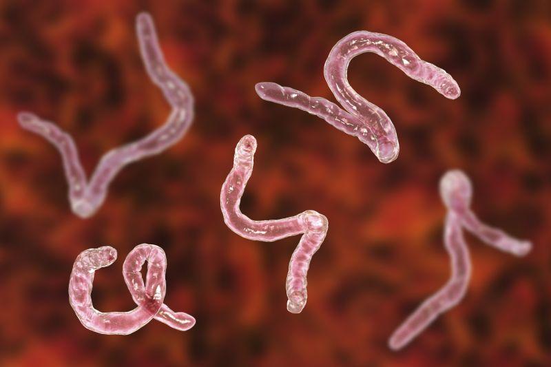 700 червей нашли в мозгу человека после того, как он съел недоваренную свинину