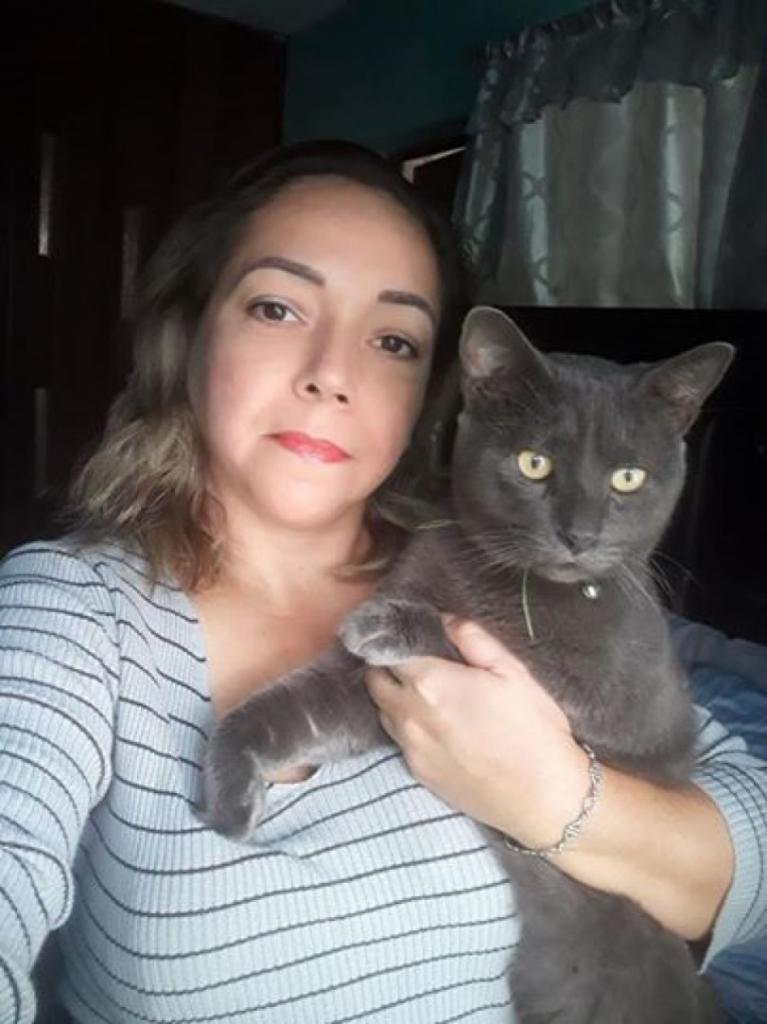 Семья узнала, что их кот живет двойной жизнью: у домашнего любимца есть другое имя и хозяева