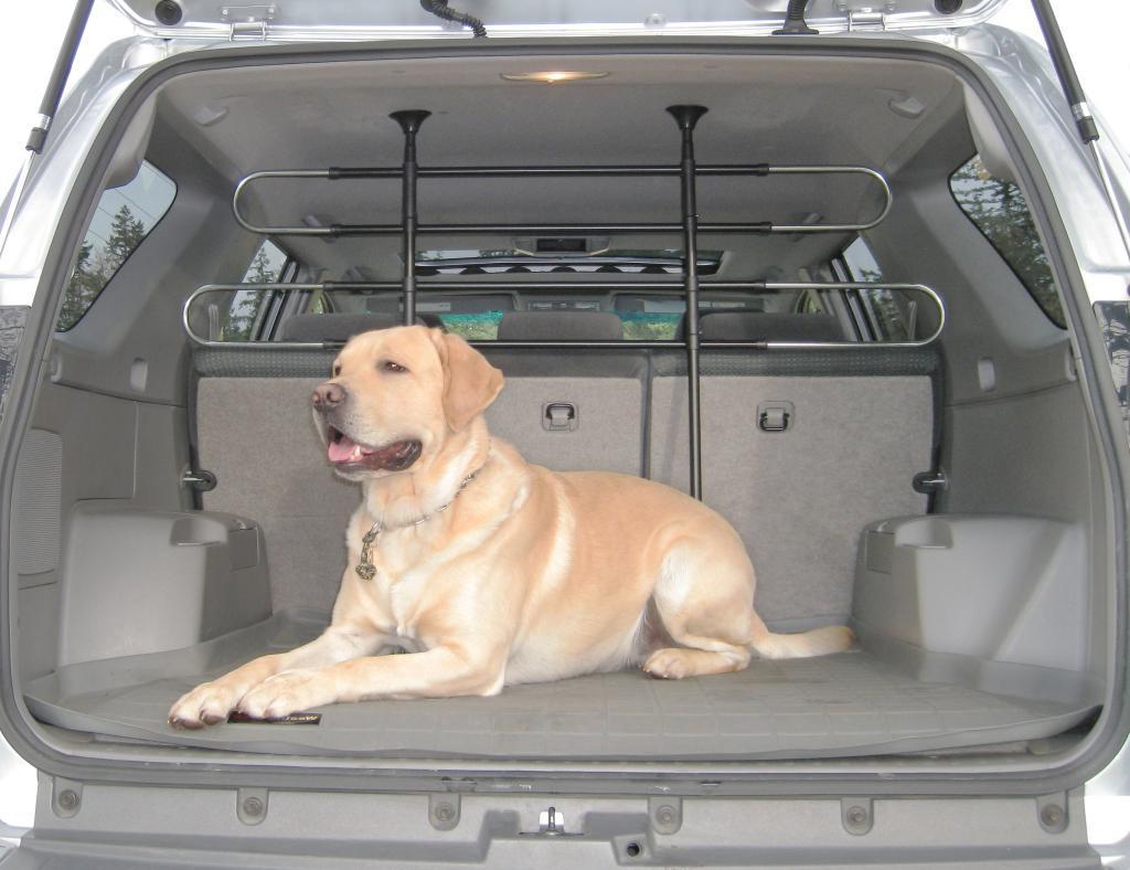 Как самостоятельно соорудить перегородку для собаки в машине