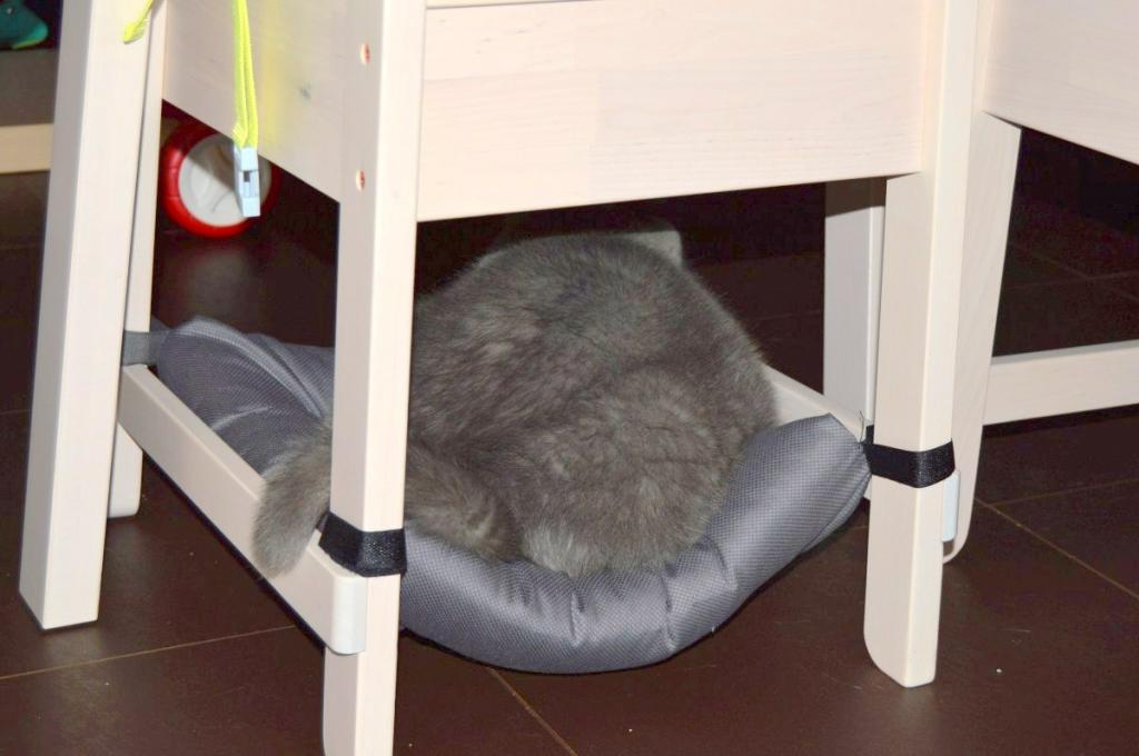 Хвостатые оценят: гамак для вашей кошки своими руками буквально за 15 минут