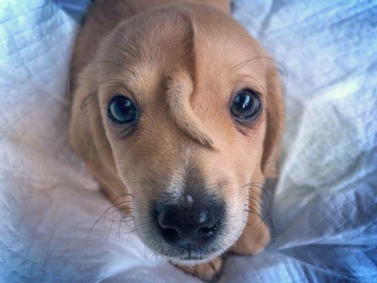 Помните щенка с хвостиком на лбу? Он наконец обрел постоянный дом и семью!